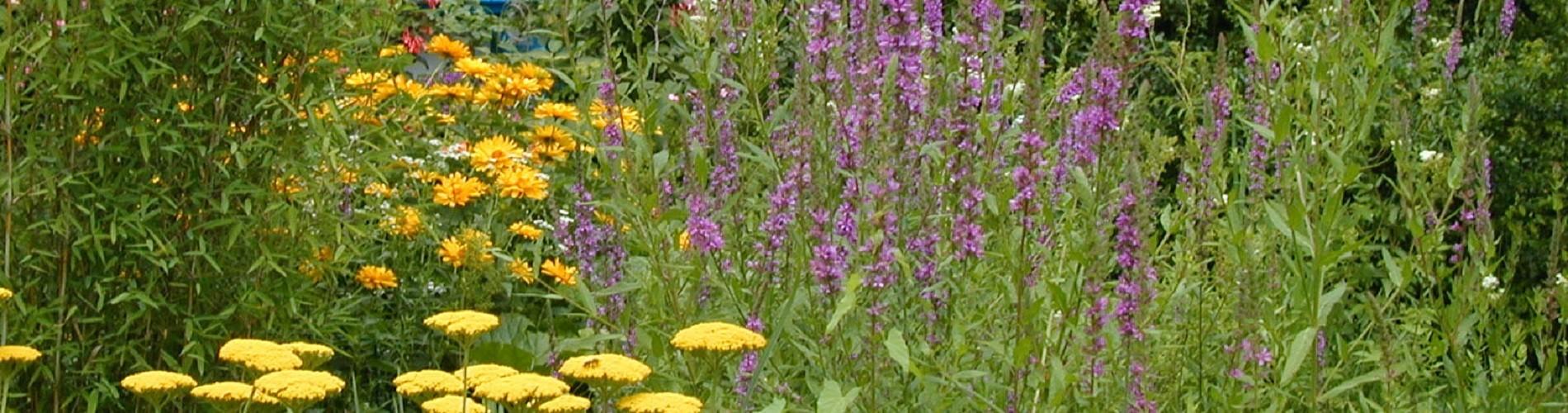 Blumen Garten Kreativ